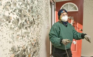Mold Removal In A Multi-Unit Property