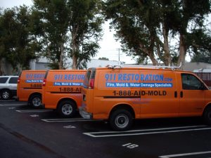 Mold Removal Services in Lathrop